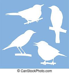 séance, arbre, silhouettes, vecteur, branche, oiseaux