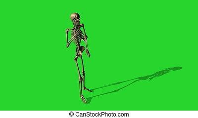 séparé, douleur, squelette, écran, -, poitrine, vert, barfing, brin