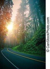 séquoia, autoroute, voyage