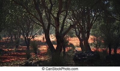 sable, rouges, arbres, buisson