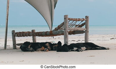 sablonneux, loungers, plage, sous, deux, sommeil, océan, zanzibar, sdf, chiens soleil