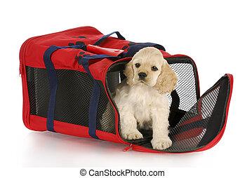 sac, chiot, caisse, chien