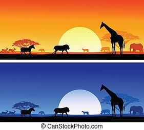 safari, fond