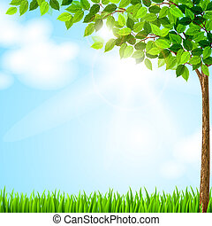 saison, arbre