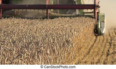 saisonnier, blé, work., processus, champ, grain, summer., récolte