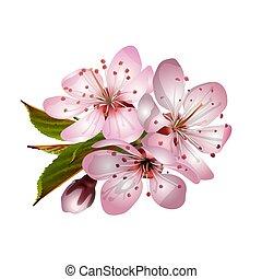 sakura, printemps, rose, fleurs
