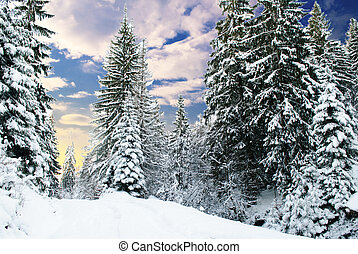 sapin, hiver, forêt
