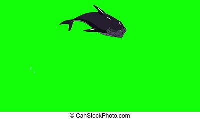 saut, dauphin, water., dehors