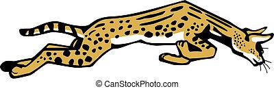 saut, serval