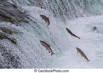 sauter, chutes, saumon, haut, sockeye