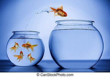 sauter, heureusement, fish