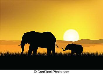 sauvage, éléphant
