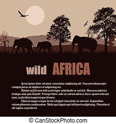 sauvage, affiche, afrique