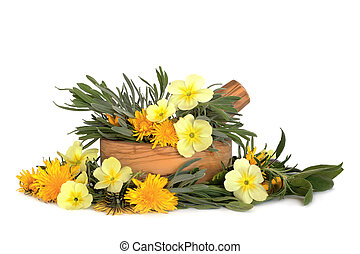 sauvage, aromate, feuilles, fleur
