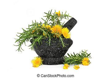 sauvage, aromate, fleurs, romarin