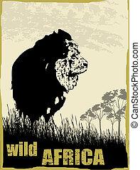 sauvage, image, afrique, lion