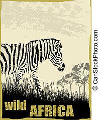 sauvage, image, afrique, zebra