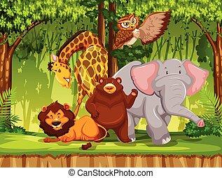 sauvage, jungle, animal