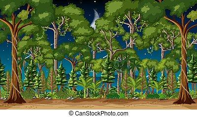 scène, forêt, arbres, paysage, nuit, beaucoup