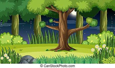 scène nuit, arbres, beaucoup, paysage, forêt