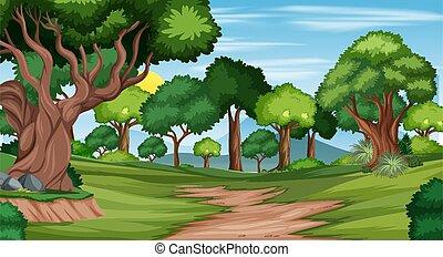 scène, piste, forêt, paysage