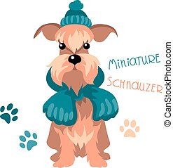 schnauzer, hiver, chien, miniature, chapeau, écharpe