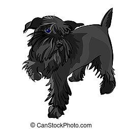 schnauzer, miniature, vecteur, chien noir