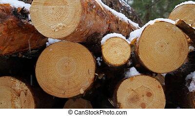 scié, bois construction