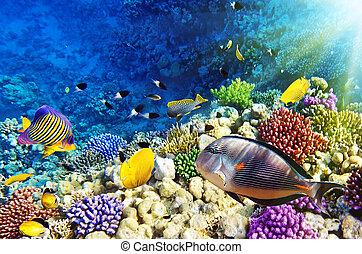 sea., fish, egypte, corail rouge