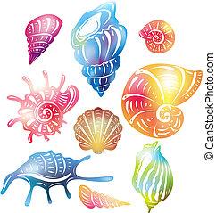 seashell, coloré
