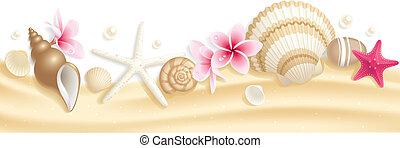 seashell, en-tête