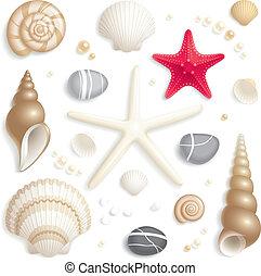 seashell, ensemble