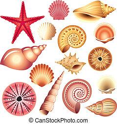 seashells, blanc, isolé