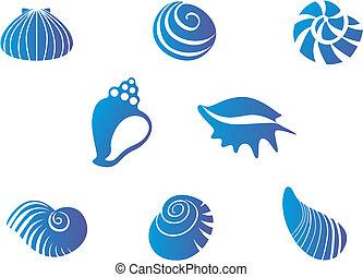 seashells, ensemble