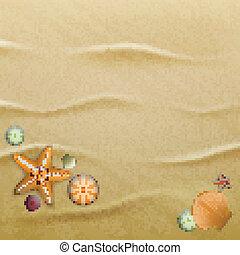 seashells, sable, fond