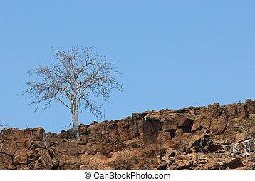 sec, arbre, rochers