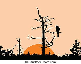 sec, arbre, vecteur, silhouette, oiseau