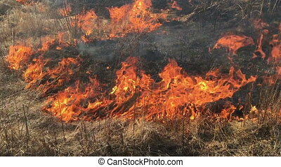 sec, brûler, champ herbe, brûlé