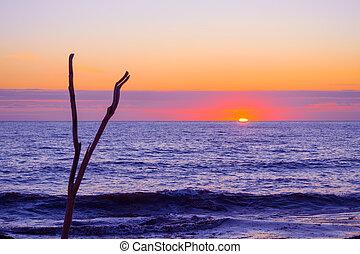 sec, coucher soleil, mer, branche