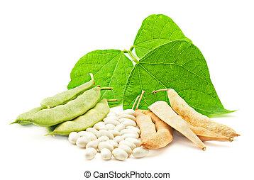 sec, feuilles, haricots, frais, blanc, rein