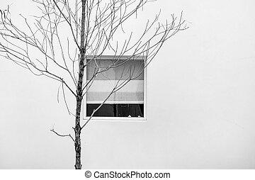 sec, minimaliste, résumé, branches