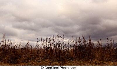 sec, nuages, sur, zoom., grass., défaillance temps