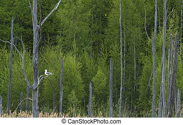 sec, printemps, premier plan., forêt, arbres