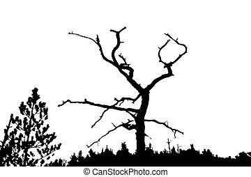 sec, silhouette, arbre