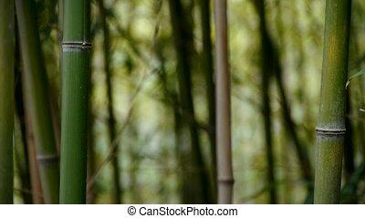 secousse, calme, vent, bambou