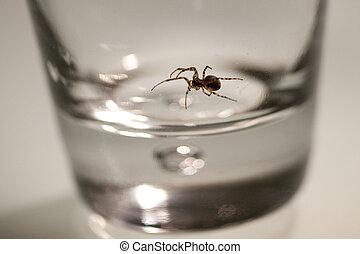 secteur, verre., araignés, disparu