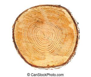 section, arbre, croix, coffre