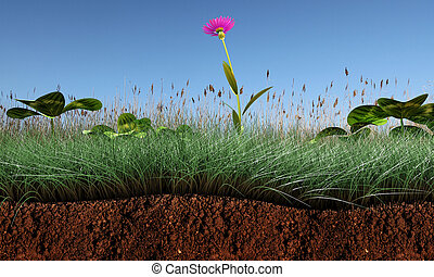 section, herbe