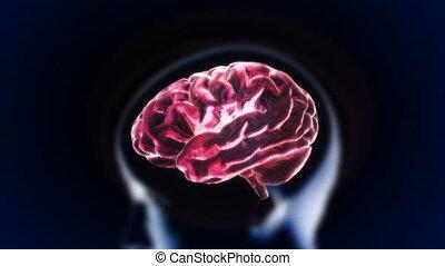 section, tête, cerveau, lueur, rouges