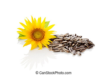 seeds., tournesol